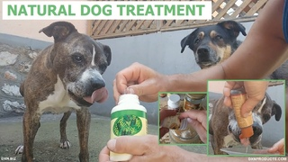 Natural dog treatment with DXN products: Spirulina, Organic Virgin Coconut Oil, Cordyceps, and Poria