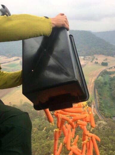 Национальная служба парков и дикой природы Австралии устроили дождь из моркови над территорией, где бушевали пожары Таким образом решили помочь оставшимся без пропитания