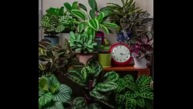 A-24-hour-time-lapse-shows-how-much-plants-like-to-move.mp4