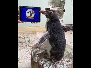 Пингвин смотрит мультфильм Пингу
