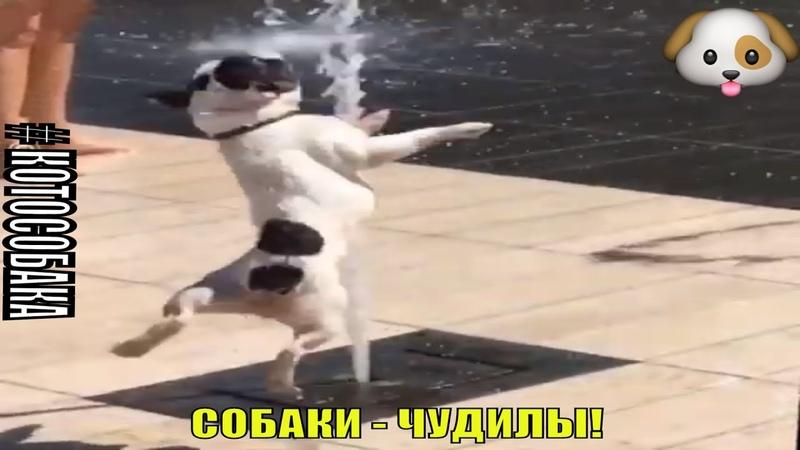 Собаки чудилы Подборка котособака зехенвейчик мопсихи catdog малышибригада sorryбабушка