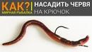 Как правильно насадить червя на крючок