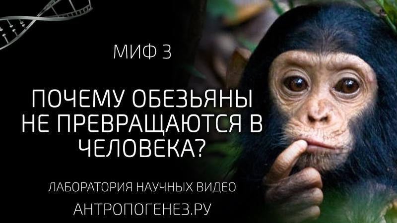 Почему обезьяны не превращаются в человека Мифы об эволюции человека