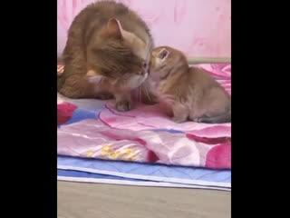 Animal world | смешные животные