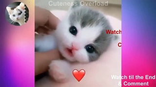 Super cute kittens | Worlds most Cute and Funny Kittens | Episode 3 |