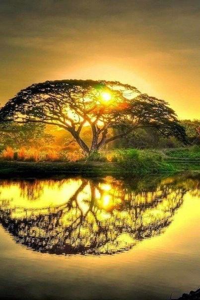 ...Как бы не начался твой день, с дождя или с солнца, Будь благодарен... Твой День Начался!......С добрым утром, новый
