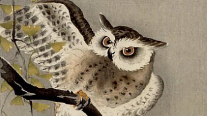 Хокку Сова-самурай. По мотивам гравюр Охара Косона. Японская поэзия.