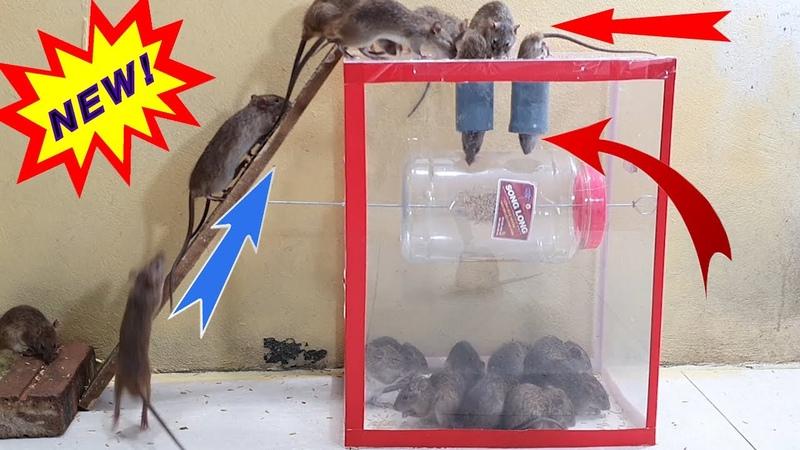 Perangkap mouse tabung plastik terbaik 2020/10 Ide perangkap tikus dari tabung plastik