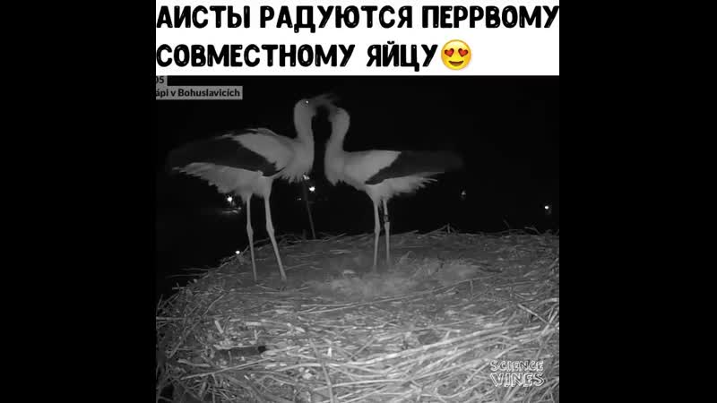 Ya_rodilsya_blogCBOLuX6AQu6.mp4