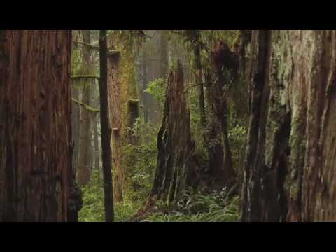 Bury Me in Redwood Country Official Trailer HD