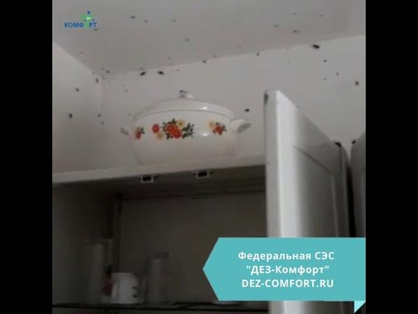 Федеральная СЭС ДЕЗ Комфорт обработка от тараканов в Хабаровске 100% результат