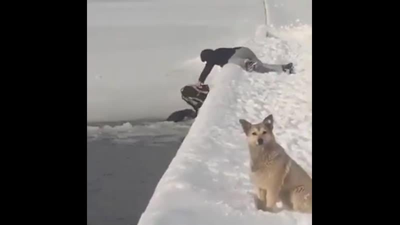 Помогли пёсику.
