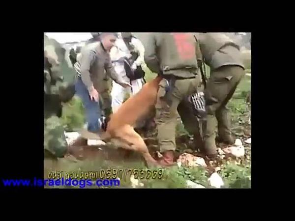 реальное применение служебных собак