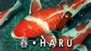 HARU 「 春 」⛩️ Japanese Lofi Hip Hop Music by Vindu ⛩️ looping mix to relax study to