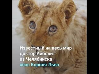 Доктор Айболит из Челябинска спас Короля Льва
