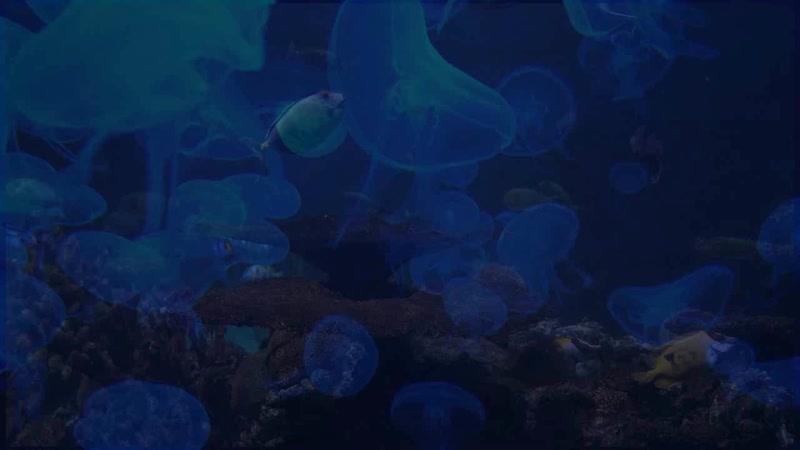 Mo Do Gema Tanzen Remix 2020 720 X 720 mp4