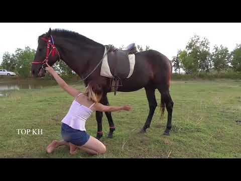 How to teach riding a horse Free ponyboy