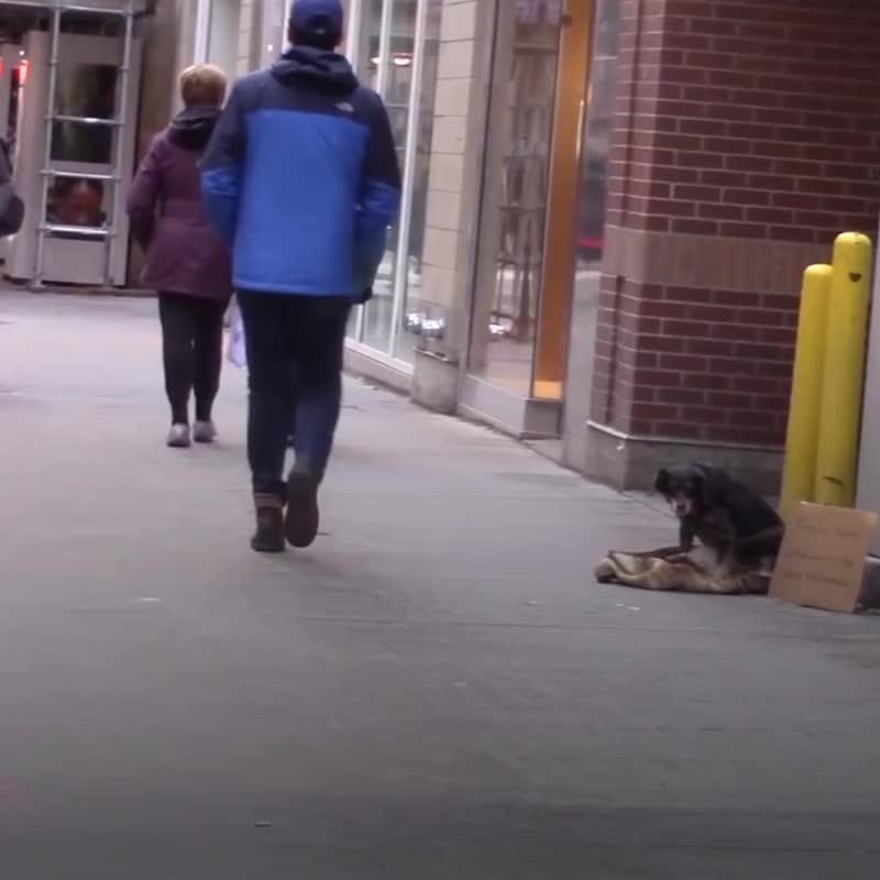 Одинокая собака ждёт помощи