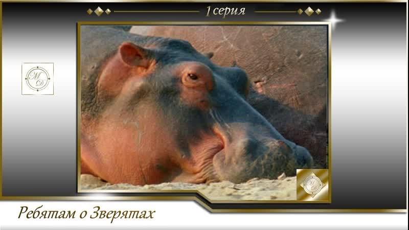 BBC Ребятам о зверятах 1 серия BBC All about animals 01