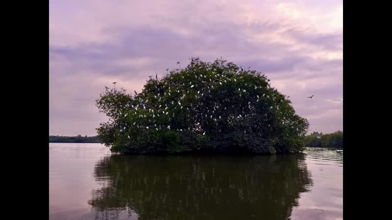 Шоу диких птиц на закате на озере Хиккадува Шри Ланка