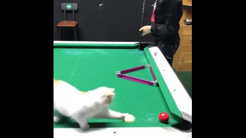 Ассистент при игре в бильярд