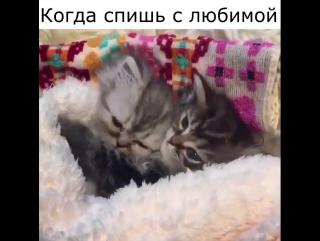 Когда спишь с любимой