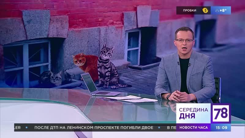 В помощь кошкам и людям