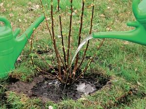 Правила и схема посадки плодовых деревьев и кустарников. Как правильно посадить сад В первую очередь начинают с разрыхления почвы, после чего подготавливают посадочные ямы. Для этого начинают на