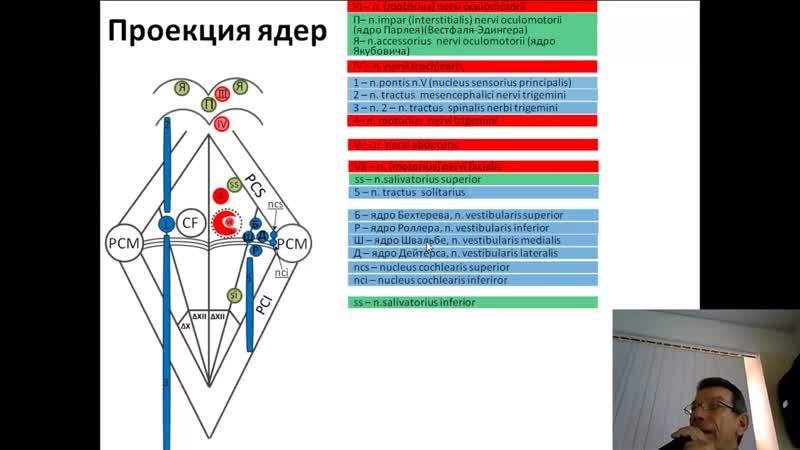 Проекция ядер черепных нервов на дно ромбовидной ямки проф В А Изранов