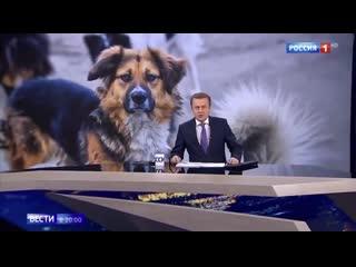 В Сергиевом Посаде выпустили стаю бездомных собак. Репортаж телеканала Россия 1