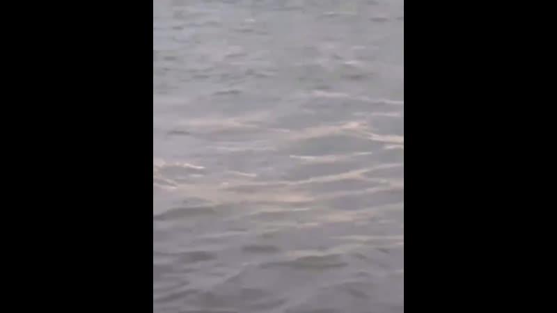 Во время шторма в Сочи двоих детей унесло в море