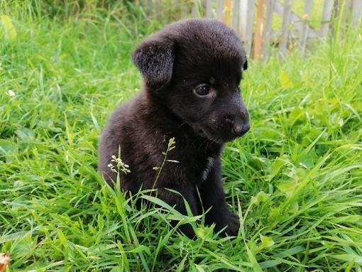 Найден щенок девочка,добрые люди как всегда решили