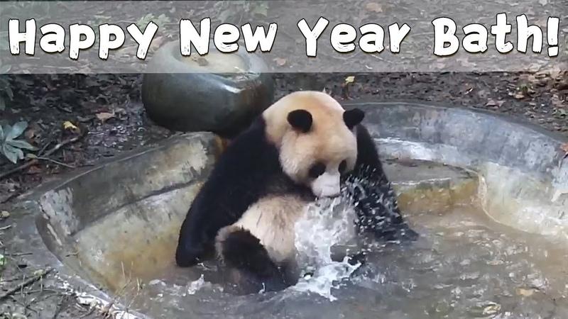 Panda Takes A Bath To Welcome The New Year iPanda