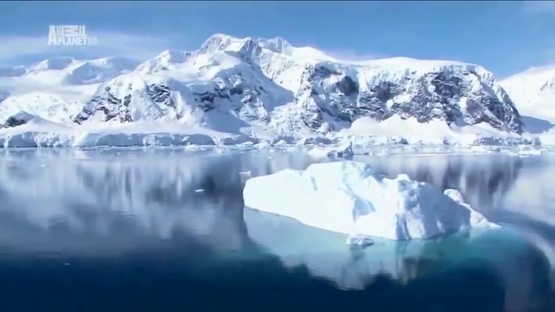 Антарктида Дикая природа В мире льда Документальный фильм