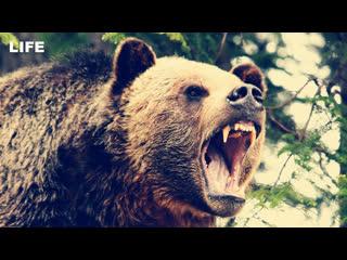Медведь напал на женщину в приюте для диких животных