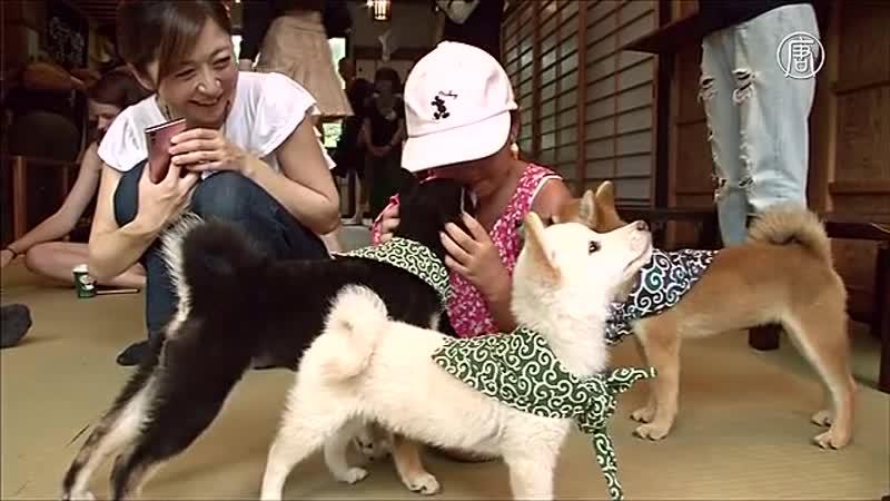 В Токио работает кафе с мини копиями Хатико