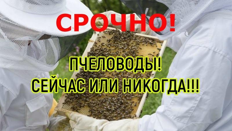 Видео Пчеловоды ВСТАВАЙТЕ СЕЙЧАС ИЛИ НИКОГДА смотреть онлайн