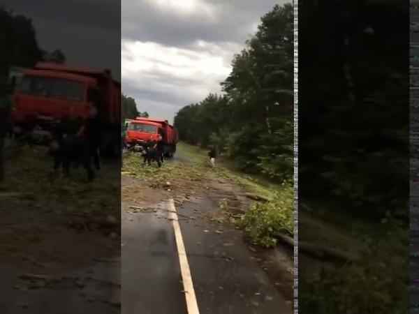 Ураган в Московском регионе множество упавших деревьев без света тысячи людей