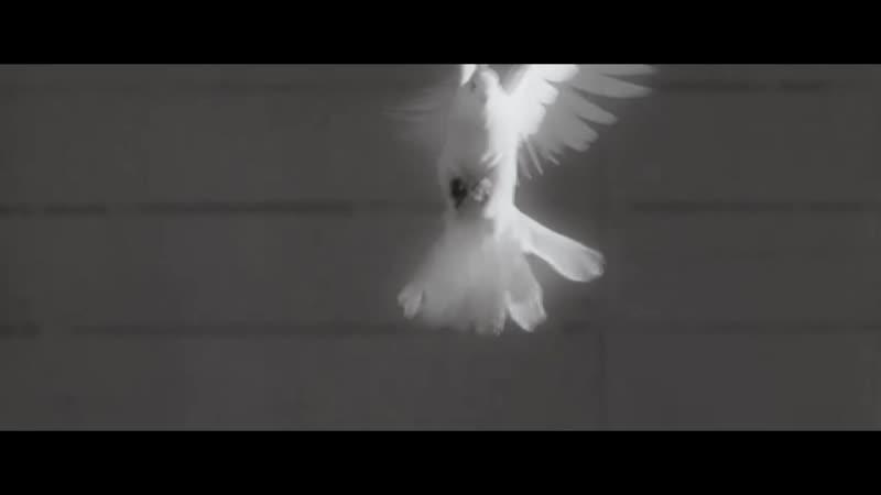 «Бессмертная любовь» -- Кларисса Рис