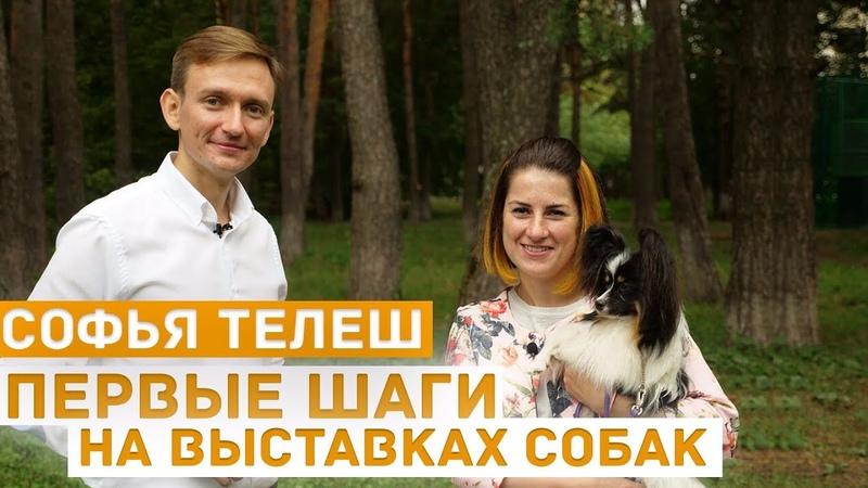 Первые шаги на выставках собак об эмоциях отношении к выставкам занятиях хендлер Софья Телеш
