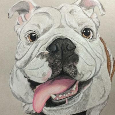 Admiral Bulldog