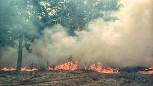 За сутки в Липецкой области сухая трава горела 138 раз