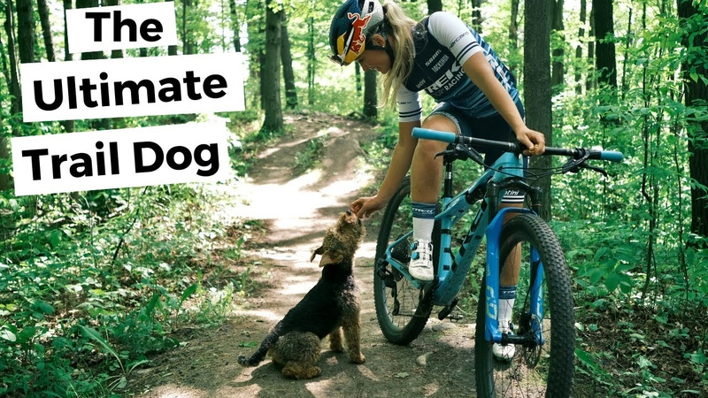 The Ultimate Mountain Bike Trail Dog Buddy the Welsh Terrier