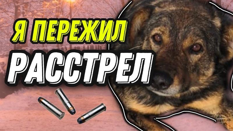 Бездомную собаку изрешетили пулями Спасение Жорика