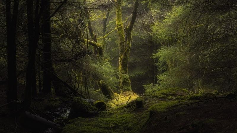 Тайны дикой природы 3 серия Затерянные миры