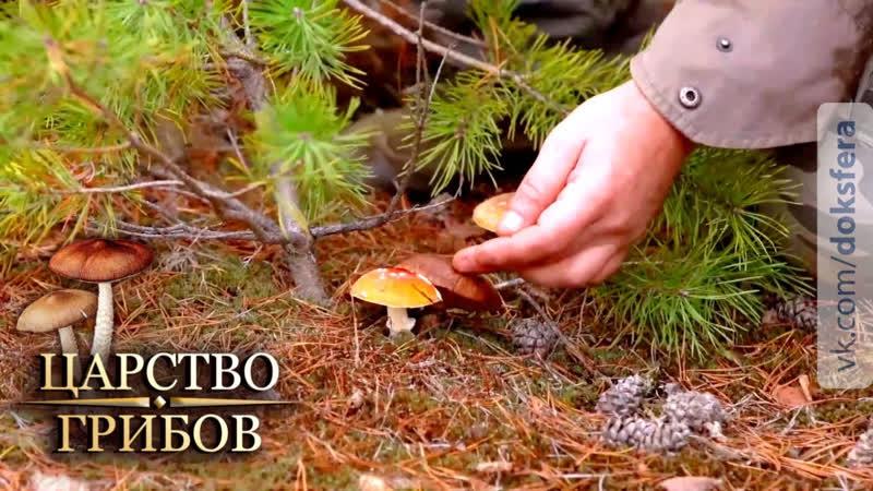Ядовитые грибы Царство грибов