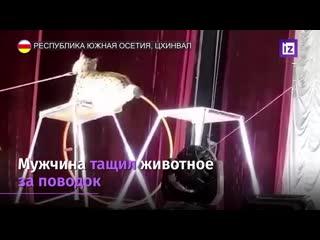 Рысь напала на дрессировщика в Южнои Осетии