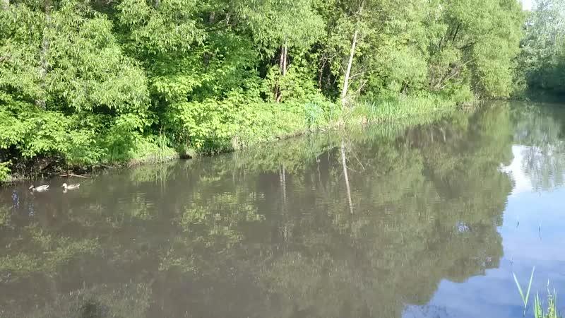 Курск , река Кур .